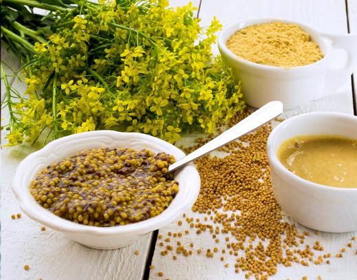 Senfpflanze und Senf