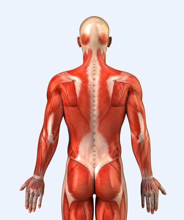 Faszien: Ursache für unerklärbare Rückenschmerzen? | A.Vogel