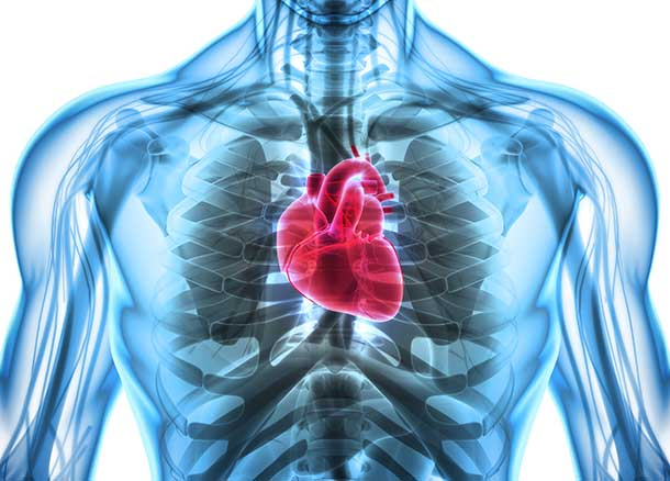 Herz-Serie Teil 1: Starkes Herz | A.Vogel