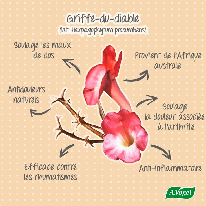 bulbe inflammatoire