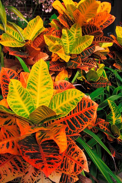 Giftige pflanzen f r katzen und hunde a vogel - Giftige zimmerpflanzen ...