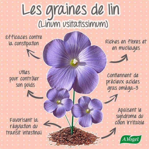 Le lin encyclop die plantes a vogel - Moulin graines de lin cuisine ...